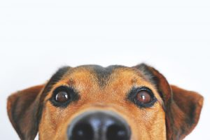 Appareils de magnétothérapie pour chiens